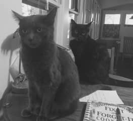 Two of our cats - Typhoid Mary and Motor Oil