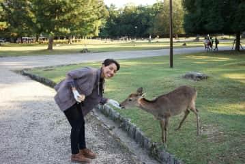 Deer in Nara Park, Japan.