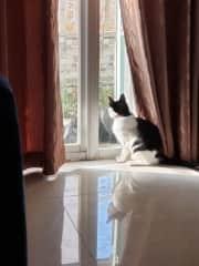 Cat, Ichigo