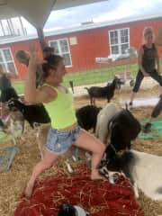 Goat yoga! (they were all pregnant...totally bizarre!)