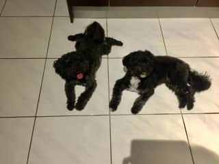 Muppet (left) & Moodle (right)
