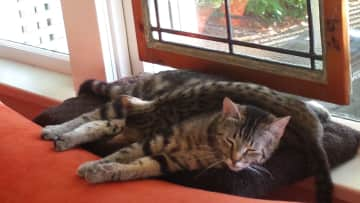Max and Simi on one of their window perches.
