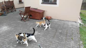 The rest of our cats. We have six cats!
