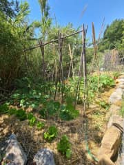 An organic vegetable patch I created for my brother