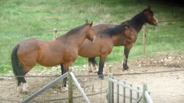 Three horses I took care of house sitting in Montana USA for several weeks May - June 2016