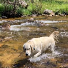 Oliver enjoying the Colorado rivers on our adventure