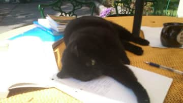 Helping with the writing and stuff