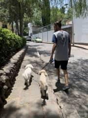 Walks in San Miguel de Allende, Mexico!