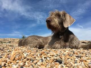 Walton on the beach