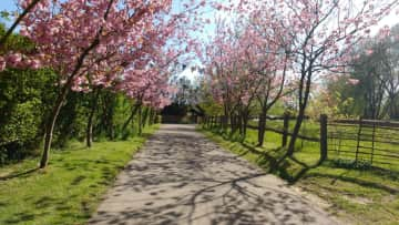 The cherry trees along the drive came into their own with the bunting for my daughter's wedding