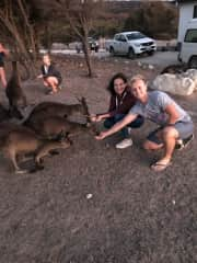 Feeding some hungry roos at Kangaroo Island, SA who have been left with little to no food after the bushfires