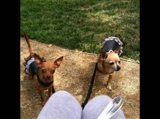 Mocha and Java wearing their Sunday best