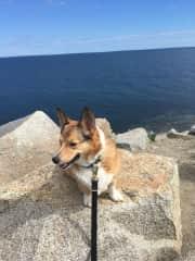 Tucker on the coast near Gloucester