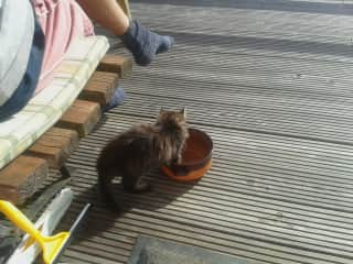 Our new addition - Oct 2019 - He just showed up on our terrace  ;-). Eventually he was returned to our 80+ year old neighbour, who was very worried having lost his new arrival