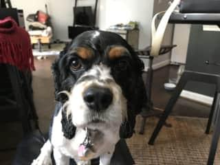 Lola loves posing for her photo.