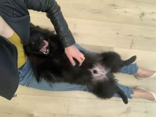 Bear is super cuddly, and very cheeky!