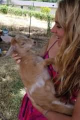 Baby goat visit