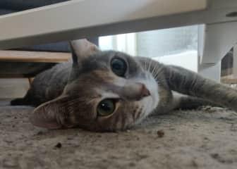Lulu! Our amazing cat