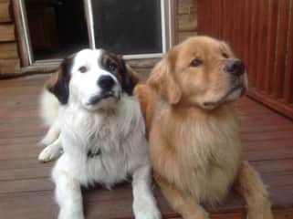 Azore and Hayden, dogs I care for in their home
