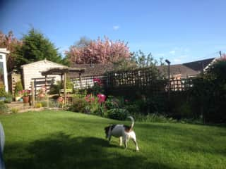 Our garden on a sunny day