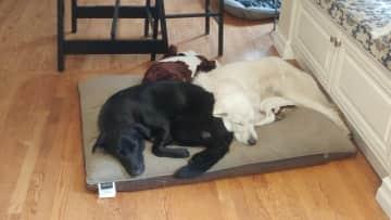 Pepper & Sunny Snuggling
