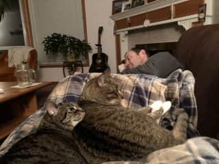 The kitties demand human snuggles