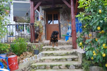 Loti at the top of the steps and Ojan in the background