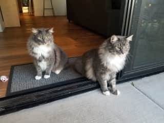 Fin (l) and Jack (r)