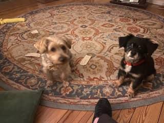 Poco and Midge