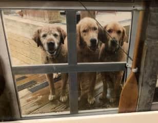 Three dog night!