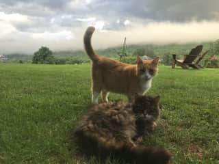 John and Frank in my backyard- a misty morning in NY state! Cats are the best!! Love you John, and Rest In Paradise Frank!