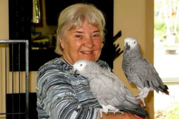 We had a lot of fun with these  African Parrotts, but Maria needed 3 months. in Coutenay