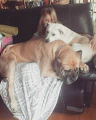 They think they're lap dogs :)