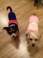 It's cold in western Canada! Annie and Gus with their sweater/jumpers on about to go out for a walk:)