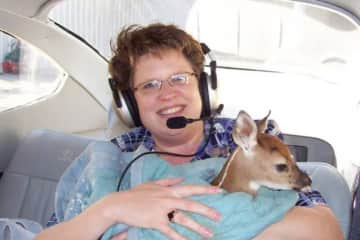 We flew a baby deer to a rescue center