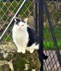 Millie in Busserolles, France