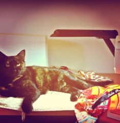 My cat loves to sew with me!