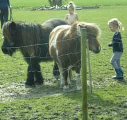 2 of our ponies
