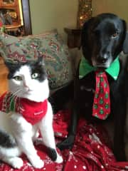 Gage, and Sincere at the holidays