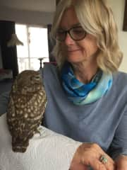 Looking after a sick Little Owl