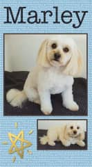 Just groomed