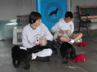 Winda's puppies at Guide Dogs for the Blind and my son