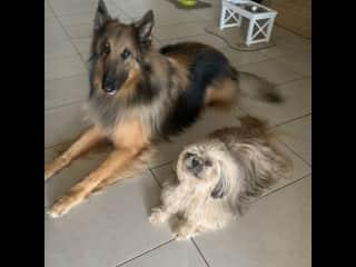 Two best buddies