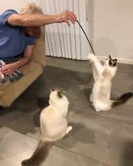 Mark entertaining the kitties at a December 2018 house sit in Australia.