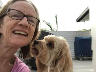 Northcote Point NZ 2016-18: 1 dog,  cat