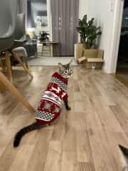 My Christmas clothing