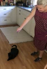 This is Elvira and I.  She is our one-eyed cat and must stay inside.  We try to exercise her in various ways.  She likes chasing the red light.  We have three other cats who are indoor/outdoor cats.