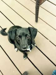 Pinot loves to hang out on the deck