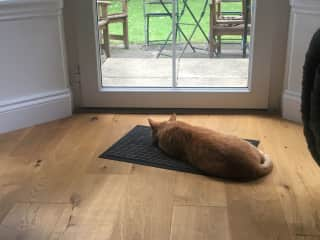 Cat sat on the mat...