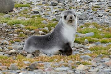wonderful expedition —South Georgia Island pets! wild!